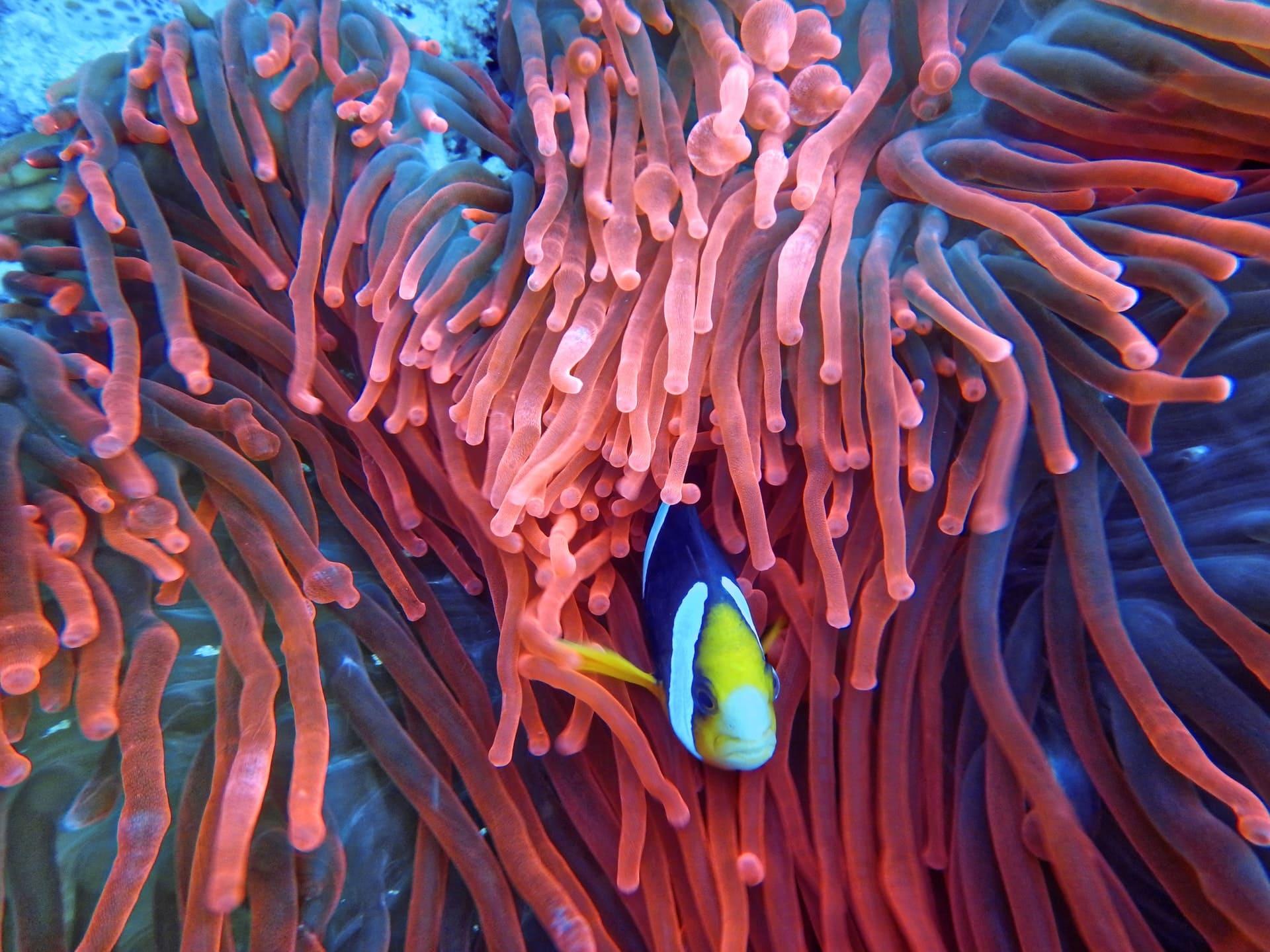 Marine Life & Oceans